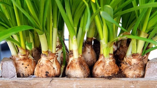 is-it-too-late-to-plant-spring-bulbs