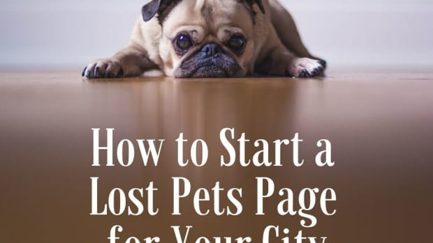 how-to-start-a-lost-pet-page-for-your-city