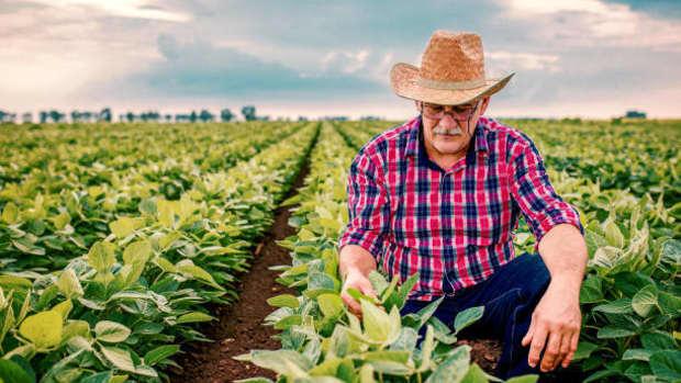 organic-food-and-health