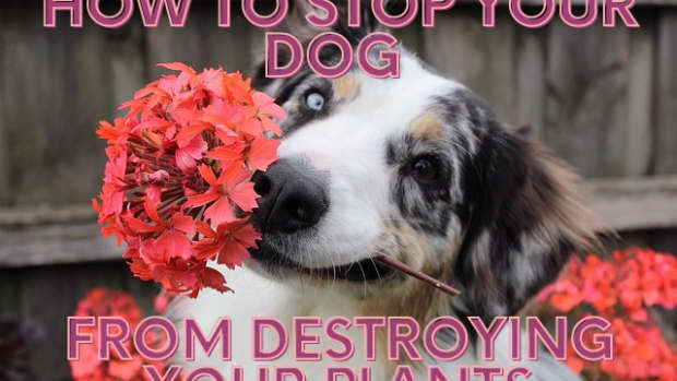 how-to-stop-a-dog-from-destroying-plants