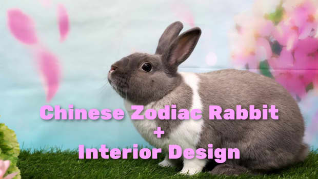 how-to-decorate-every-room-in-your-home-like-the-chinese-zodiac-the-rabbit