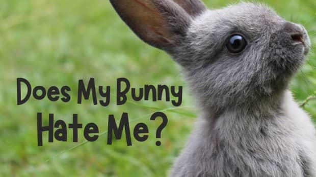 yes--your-rabbit-hates-you-how-to-be-friends-with-your-bunny