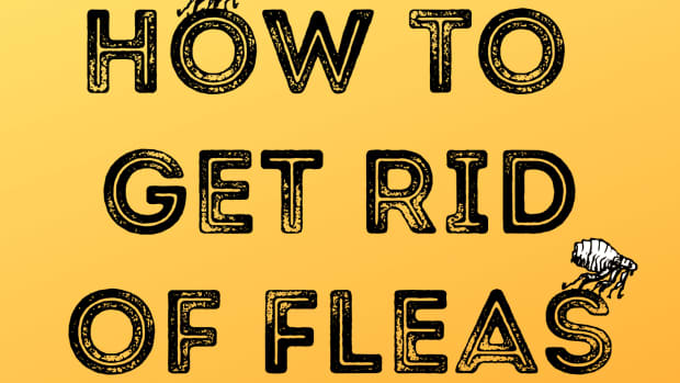 the-only-way-to-get-rid-of-fleas