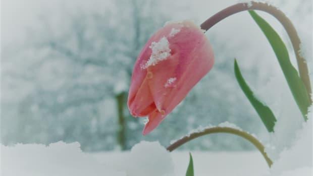 winters-gaze