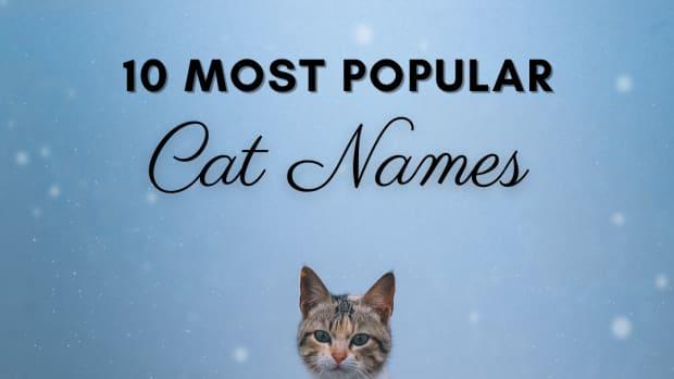 15-most-popular-cat-names-in-america