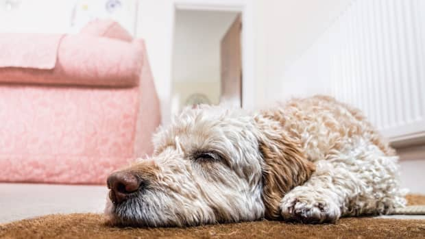 pet-proof-wallpaper-and-other-materials-that-are-tough-for-them