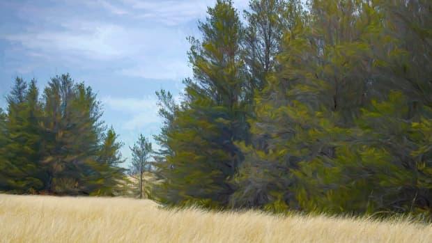 9-most-common-conifers-in-michigan