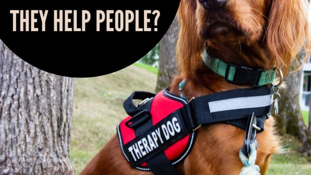 therapy-dogs-how-they-provide-a-helping-paw