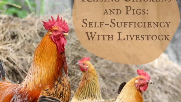 how-much-meat-chicken-pork-beef-do-i-need-to-produce-to-be-self-sufficient