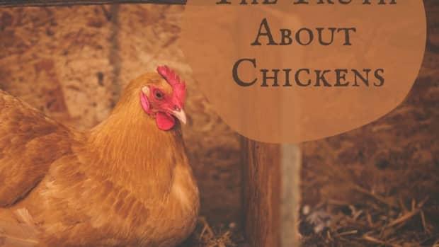 chicken_truths