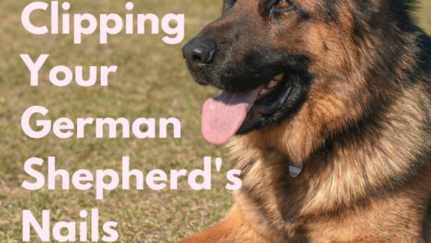 german-shepherd-nail-care-tricks