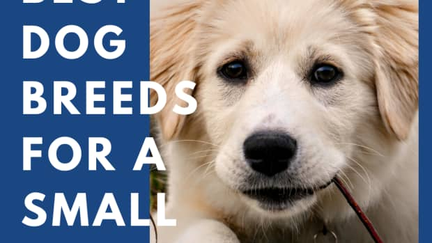 best-farm-dog-breeds
