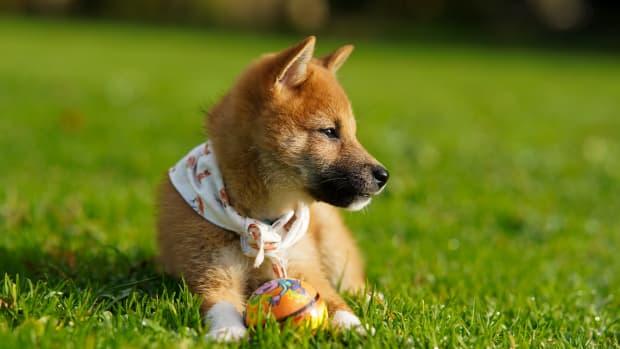 best-dog-puzzle-toys
