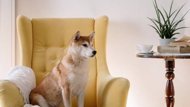 10-health-tips-for-taking-care-of-dogs
