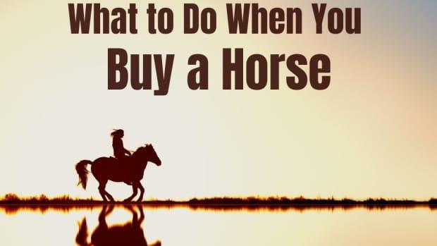 so-you-bought-a-horse