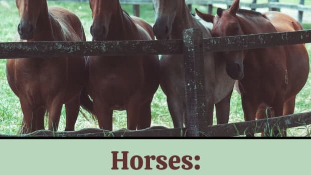 the-seen-and-unseen-social-behaviors-of-wild-and-domestic-equines