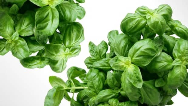must-have-grow-herbs-at-home-kit