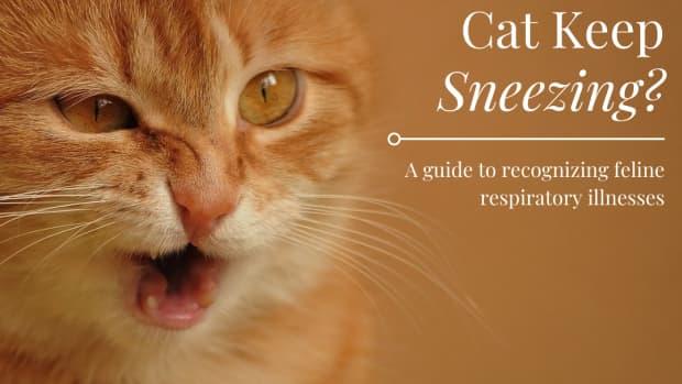 cat-sneeezing-cat-flu