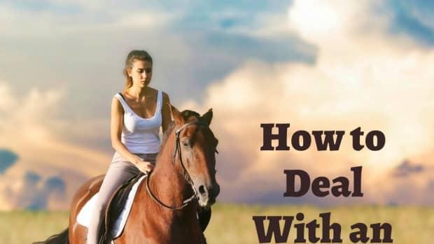 dealinganxioushorse