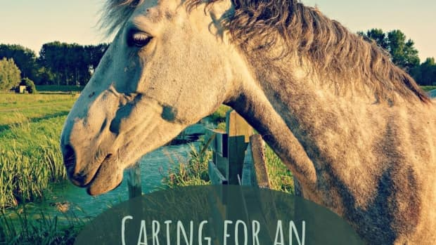 horses-and-aging