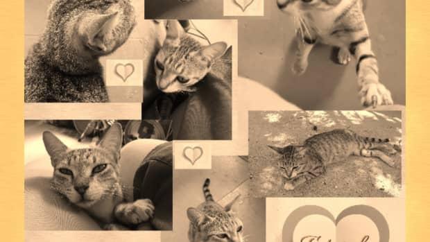 fetwab-the-kitty-a-poem