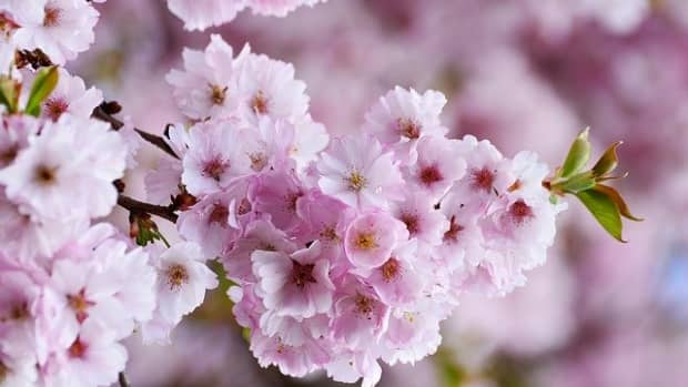 10-most-beautiful-flowers-of-the-world