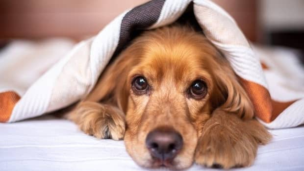 how-to-stop-a-dog-from-sleeping-on-your-bed