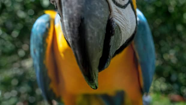 all-about-macaws