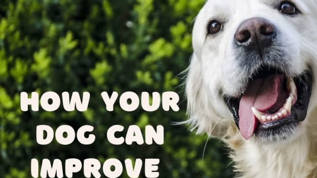 6-ways-your-dog-can-help-you-improve-your-mood