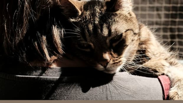 my-cat-has-cancer