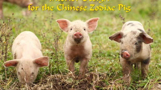 how-to-decorate-every-room-in-your-home-like-the-chinese-zodiac-the-pig
