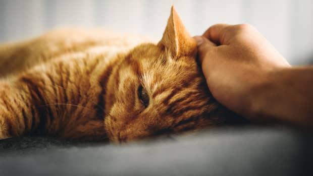 chronic-kidney-failure-cats