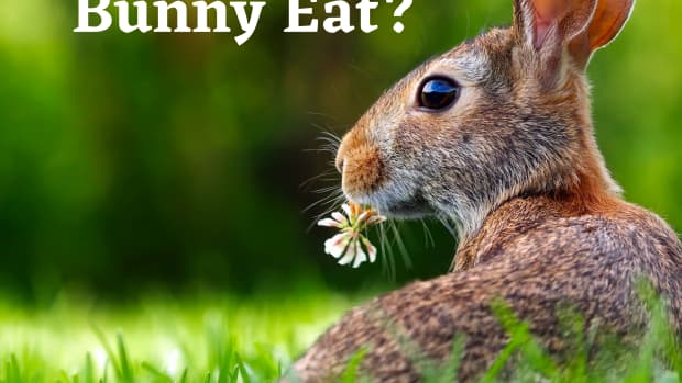 bad-rabbt-food-what-not-to-feed-your-bunny
