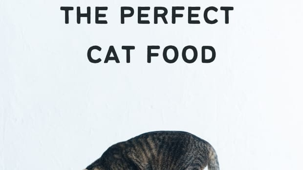 how-to-choose-the-best-cat-food-for-your-cat