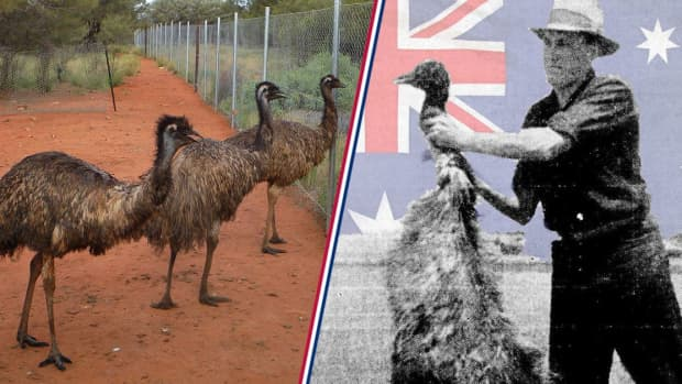 historical-wtf-moments-the-time-australia-went-to-war-with-birds
