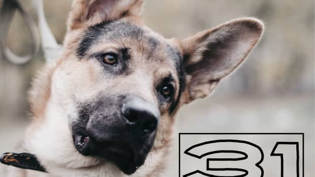 common-dog-behaviors-you-should-know-their-meaning