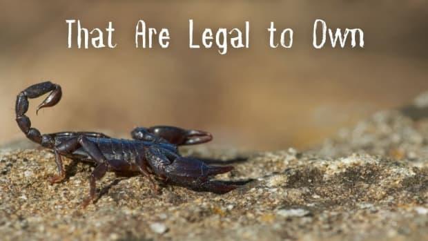 venomous-pets-that-are-legal
