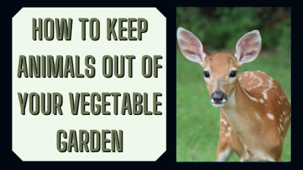 how-to-keep-animals-from-eating-your-vegetable-plants