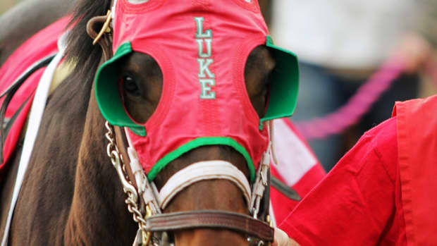 are-thoroughbred-racehorses-really-being-bred-to-death