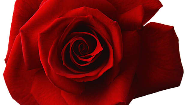red-rose-bay-or-shared-psychosis-way