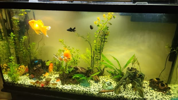 fixing-a-green-tinted-fish-tank-murky-water-solutions
