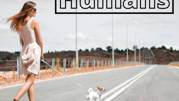 why-should-i-walk-my-dog-why-is-it-so-important