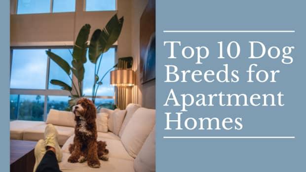 10-best-dog-breeds-for-apartment-living