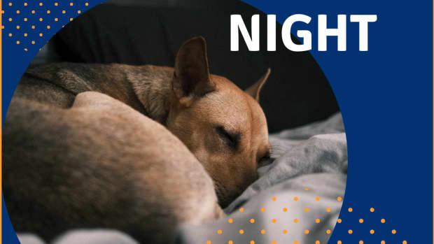 dog-sleep-all-night