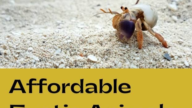 exotic-pets-that-are-inexpensive-or-cheap