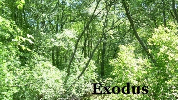 exodus-from-fear
