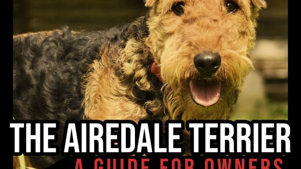 the-airedale-terrier-a-guide-for-owners