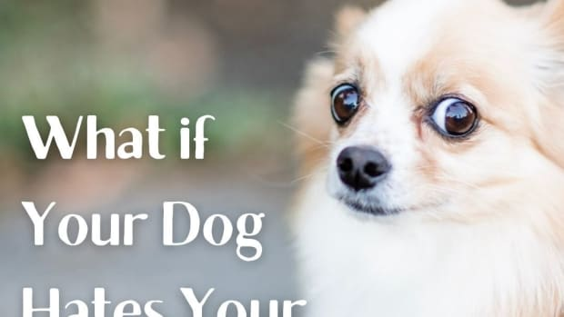 what-to-do-if-your-dog-doesnt-like-your-boyfriend