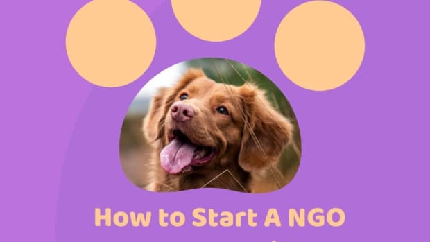 how-to-start-a-ngo