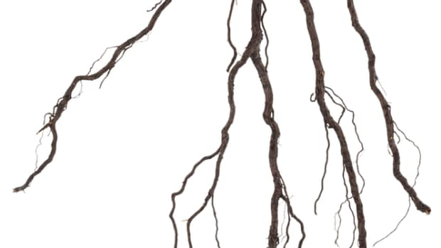 sprout-roots-are-built-not-bought